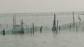 Orissa (2)